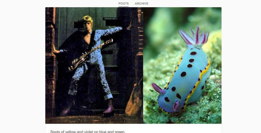 Bowie nudibranch